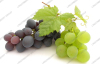 Grape juice powder / Latin Name: Vitis vinifera