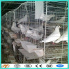 Full Equipment Layer Quail Cage/chicken cage /pigeon cage