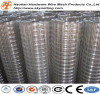 Competitive Price galvanized welded wire mesh (ISO9001 factory)