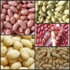 china best peanut kernels peanut in shell blanched peanuts
