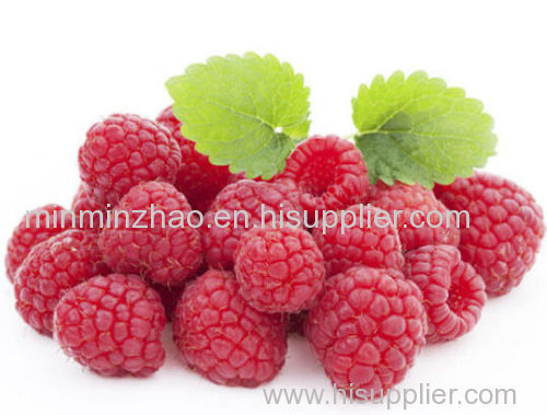 Natural Raspberry Seed Extract Ketone Powder