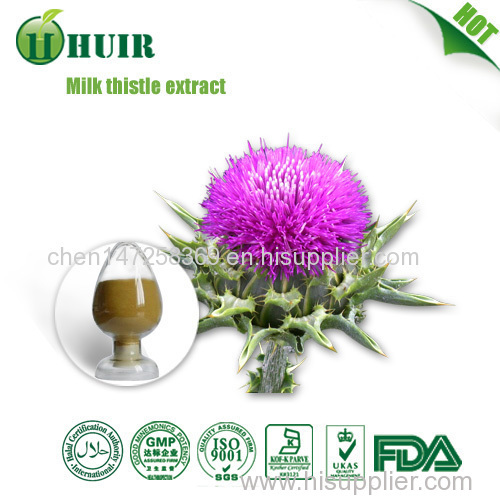 Top Quality Silymarin Milk Thistle Extract 80% Silymarin