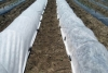 Nonwoven fabric for agriculture