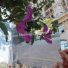 1.8*1220*1830MM Plastic Double Sided Ps plastic Mirror sheet