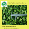 Frozen IQF Broccoli Frozen Vegetables