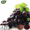 Grape Seed Extract Proanthocyanidins 95% and 98% by UV