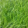 40mm Pile Height Artificial Turf/grass for Football Fields