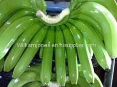 Green Fresh Cavendish Bananas