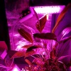 LED Grow Light AC220V 50W LED Full Spectrum Phyto Lamp Greenhouse Hydroponic Plant Growth Lighting