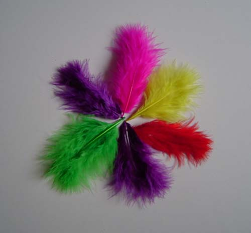 coloured turkey feathers